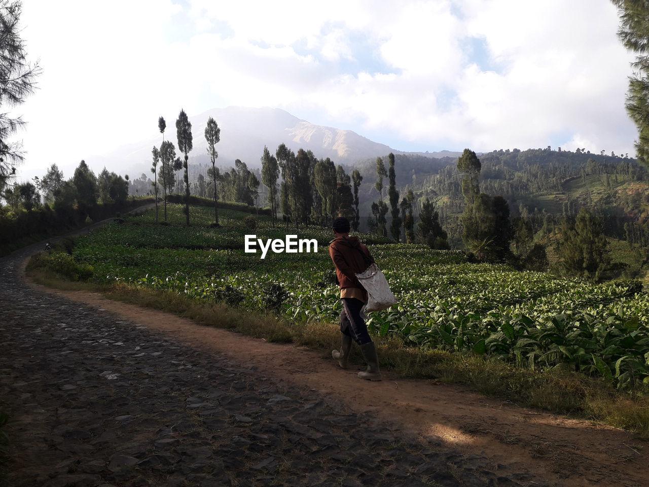 The spirit of gardening wonosobo indonesia