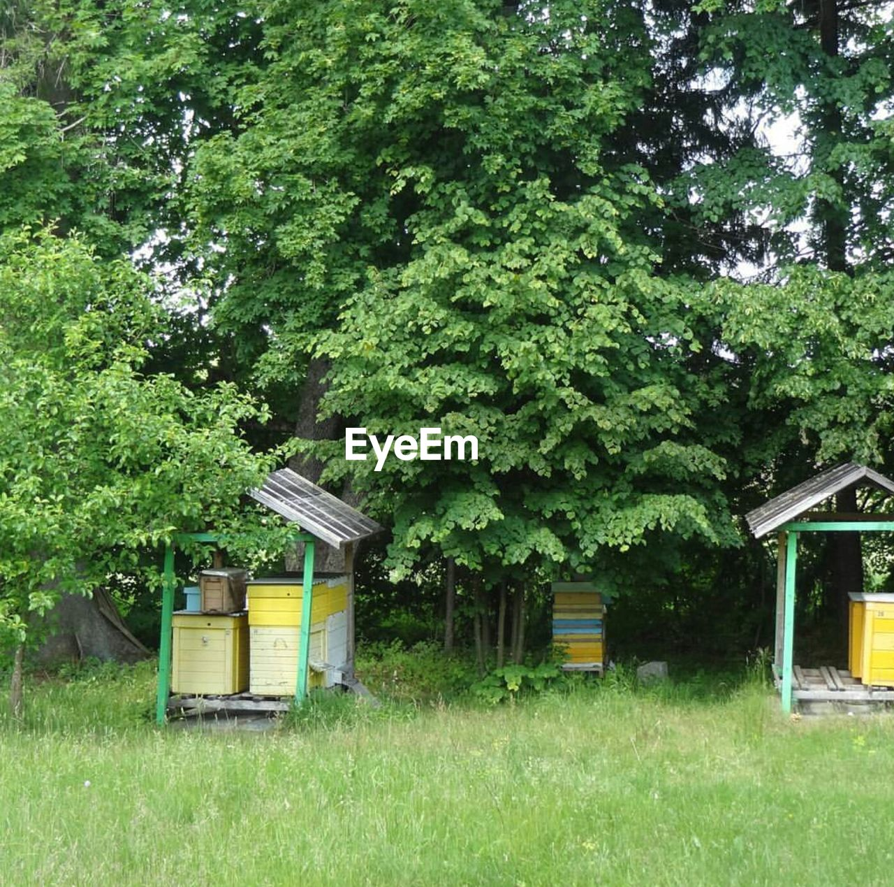 tree, beehive, day, grass, green color, no people, outdoors, growth, field, apiculture, nature