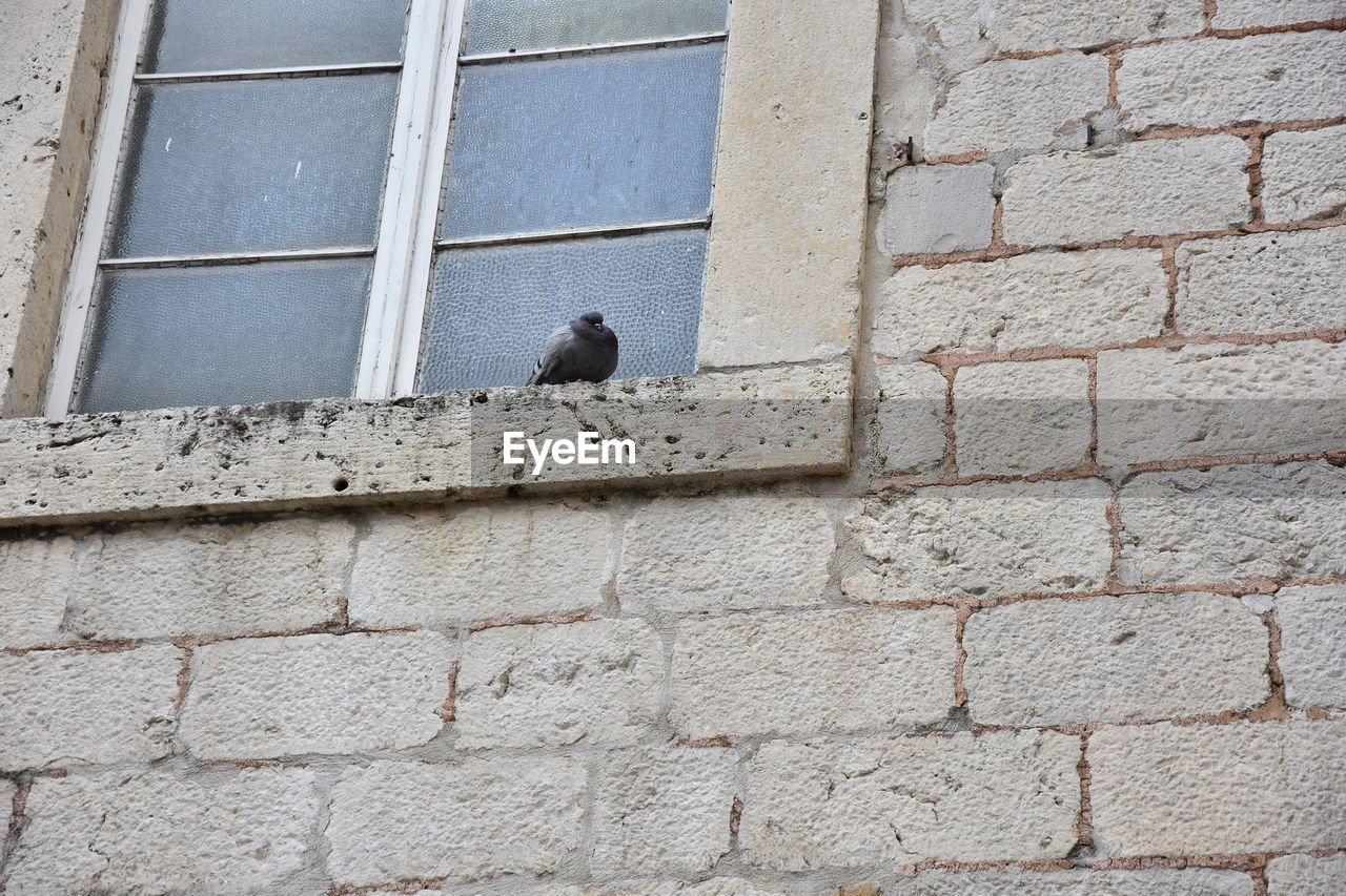 LOW ANGLE VIEW OF BIRD PERCHING ON STONE WALL