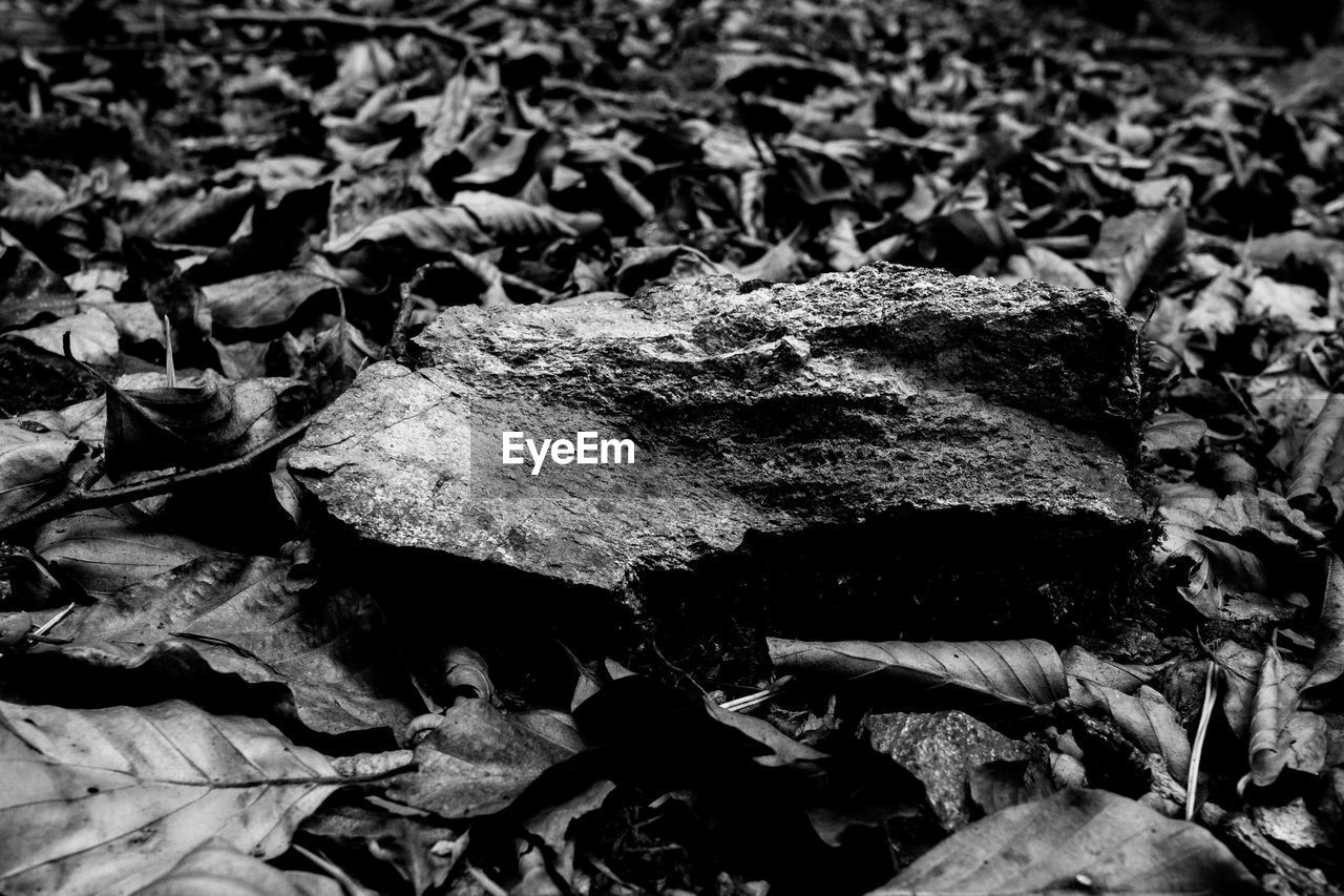 no people, nature, leaf, plant part, close-up, day, land, field, dry, full frame, high angle view, outdoors, backgrounds, plant, textured, abundance, tree, selective focus, growth, rock, leaves