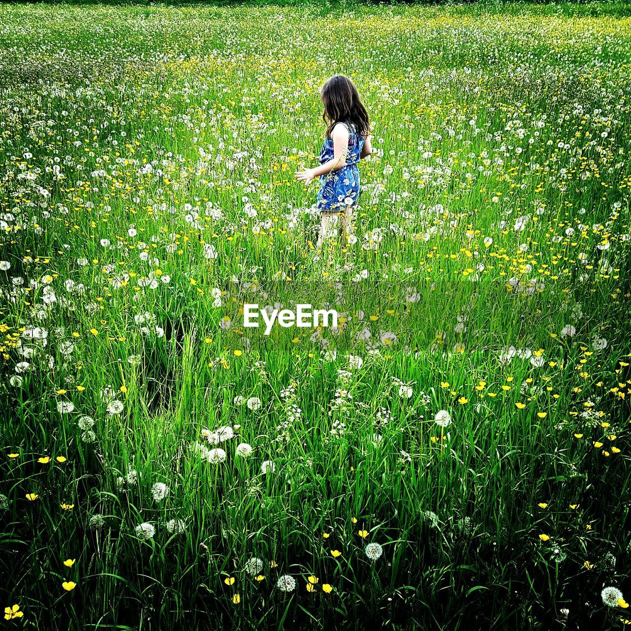 Girl standing amidst flowering field
