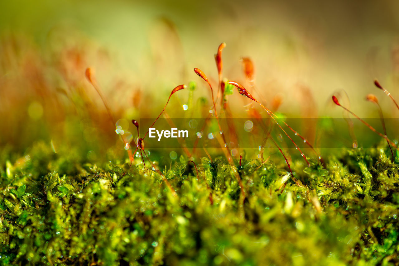 plant, growth, beauty in nature, selective focus, green color, field, freshness, close-up, nature, flowering plant, flower, land, fragility, vulnerability, day, no people, grass, outdoors, drop, wet, dew
