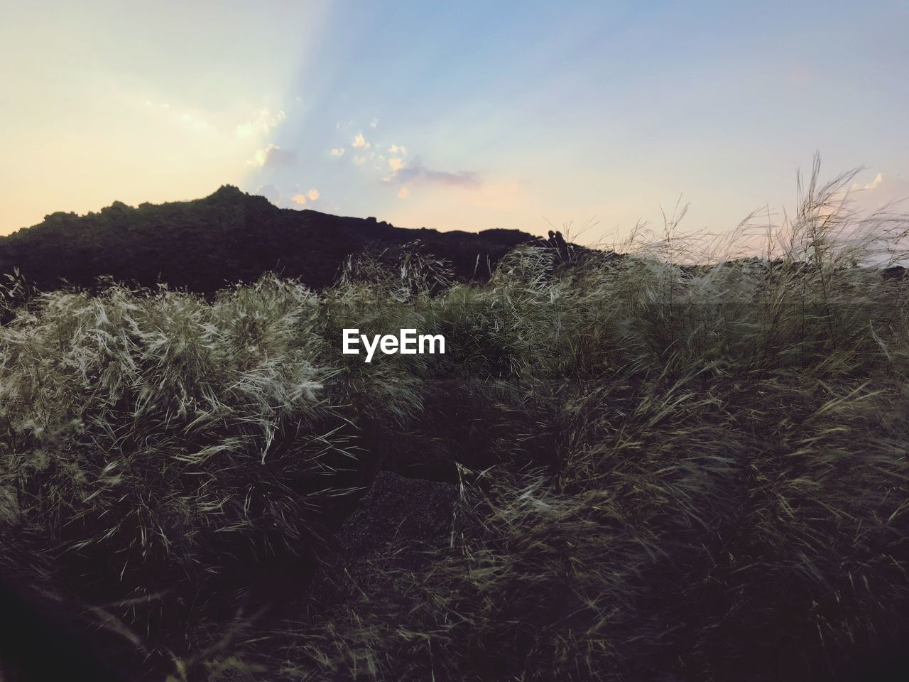 plant, sky, tranquility, growth, beauty in nature, tranquil scene, no people, land, nature, sunset, landscape, non-urban scene, field, environment, scenics - nature, mountain, grass, outdoors, day, cloud - sky, timothy grass