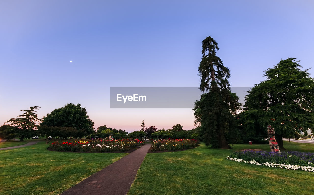 plant, sky, tree, grass, clear sky, nature, footpath, park, growth, beauty in nature, park - man made space, no people, green color, blue, copy space, tranquility, outdoors, field, tranquil scene, lawn, garden path