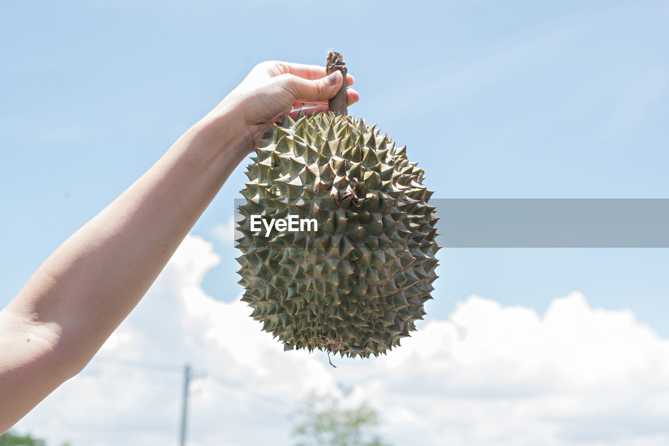 Cropped hand holding durian against sky