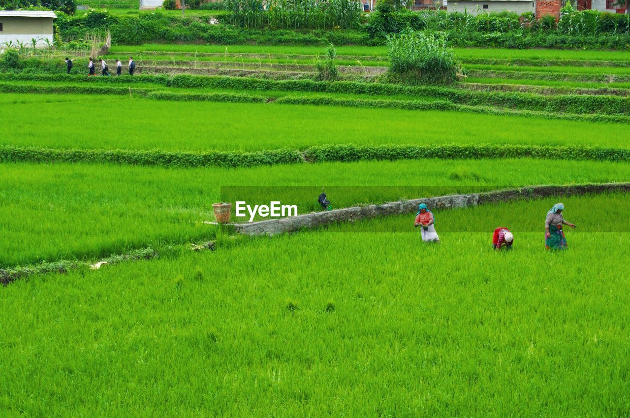 High Angle View Of People Working On Agricultural Field