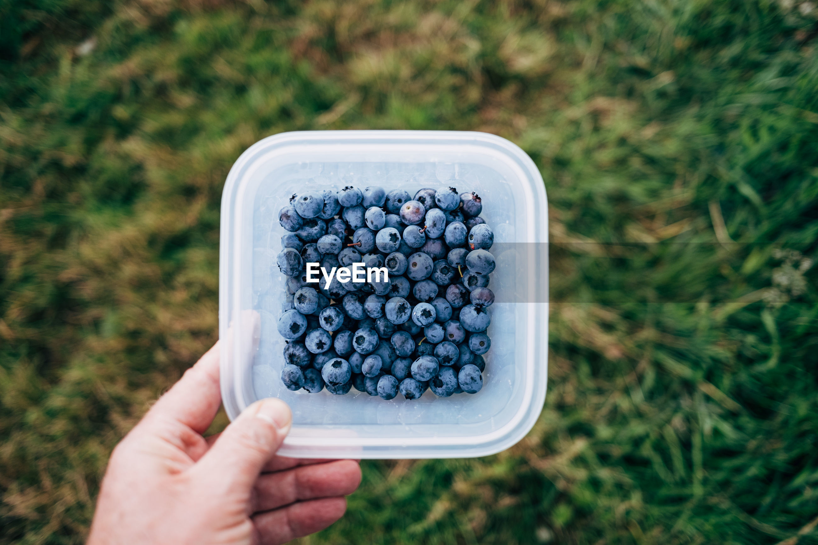 High angle view of hand holding blueberries in bowl
