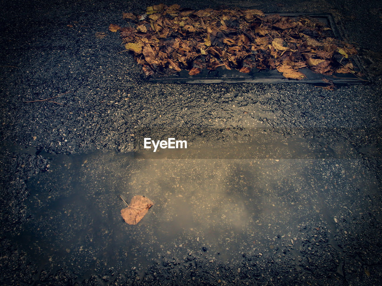 autumn, heat - temperature, change, outdoors, leaf, nature, no people, day, close-up