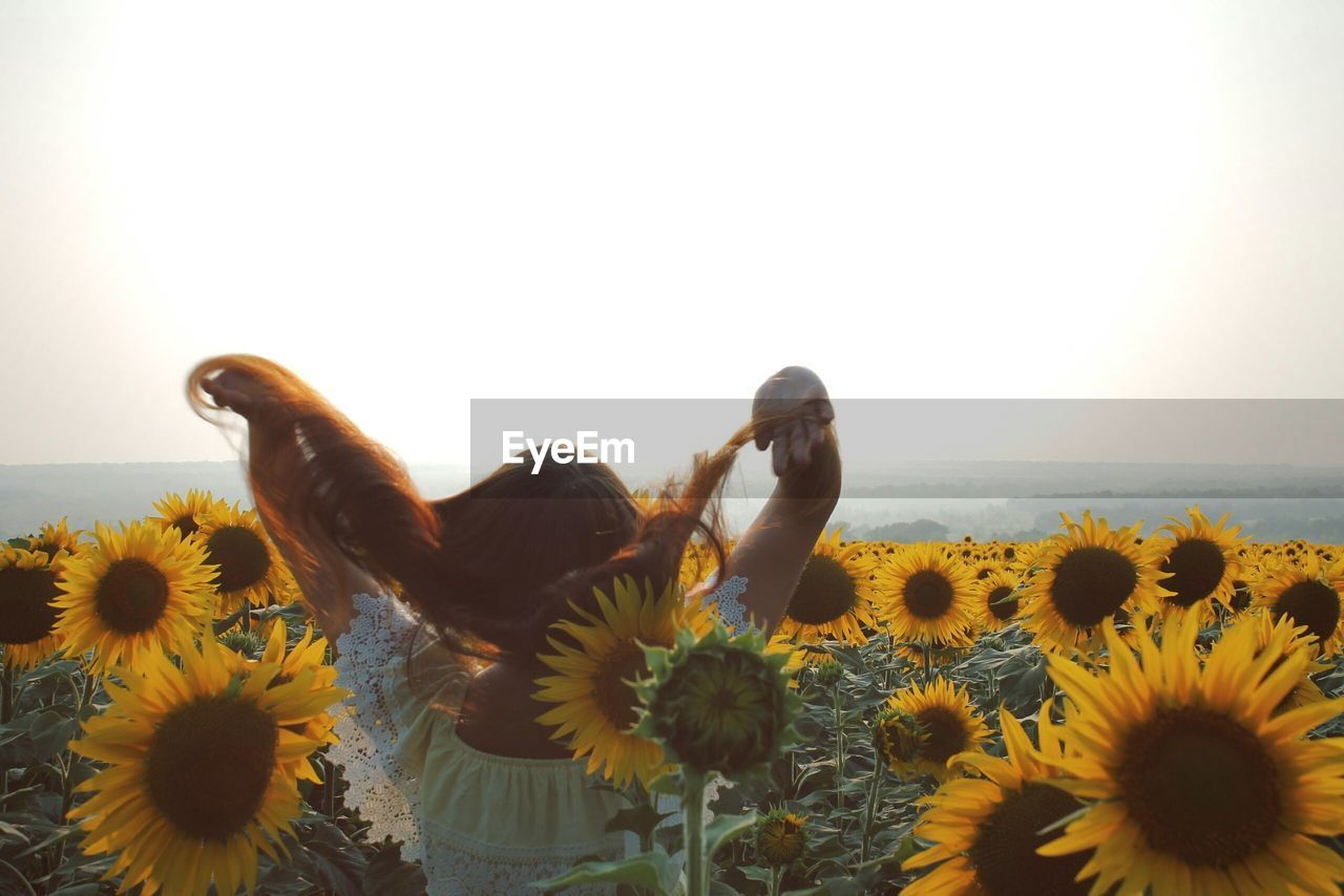 flower, yellow, fragility, petal, nature, flower head, beauty in nature, freshness, sunflower, growth, one person, plant, clear sky, animal themes, springtime, close-up, day, outdoors, black-eyed susan, people