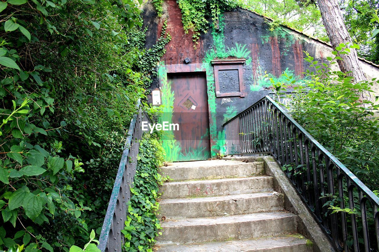 plant, staircase, architecture, tree, built structure, steps and staircases, no people, growth, forest, nature, green color, building exterior, railing, day, direction, outdoors, abandoned, building, land, house