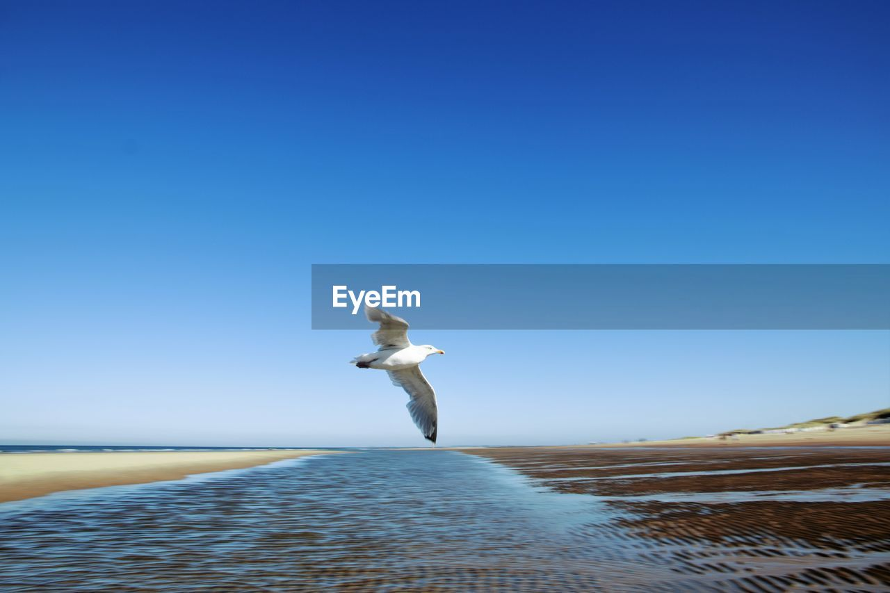 sky, water, clear sky, bird, vertebrate, copy space, sea, animal, animal themes, one animal, nature, beauty in nature, scenics - nature, animals in the wild, flying, day, animal wildlife, spread wings, blue, seagull, no people, horizon over water, outdoors