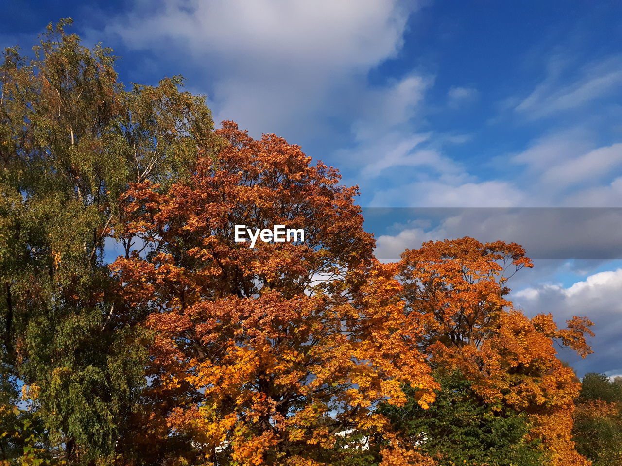 tree, plant, change, autumn, sky, beauty in nature, cloud - sky, low angle view, tranquility, growth, orange color, nature, day, no people, scenics - nature, tranquil scene, outdoors, idyllic, non-urban scene, branch, fall