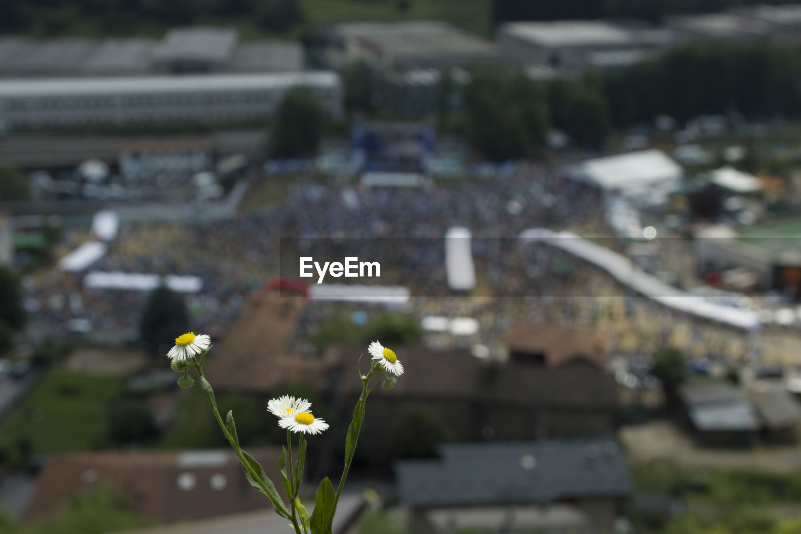 HIGH ANGLE VIEW OF FLOWERING PLANT AGAINST CITY