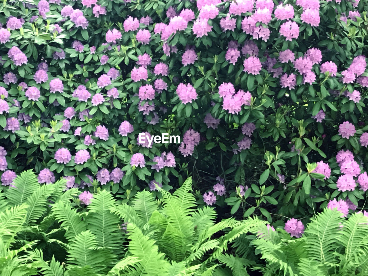 growth, plant, leaf, flower, nature, green color, fragility, beauty in nature, no people, day, freshness, outdoors, blooming, flower head