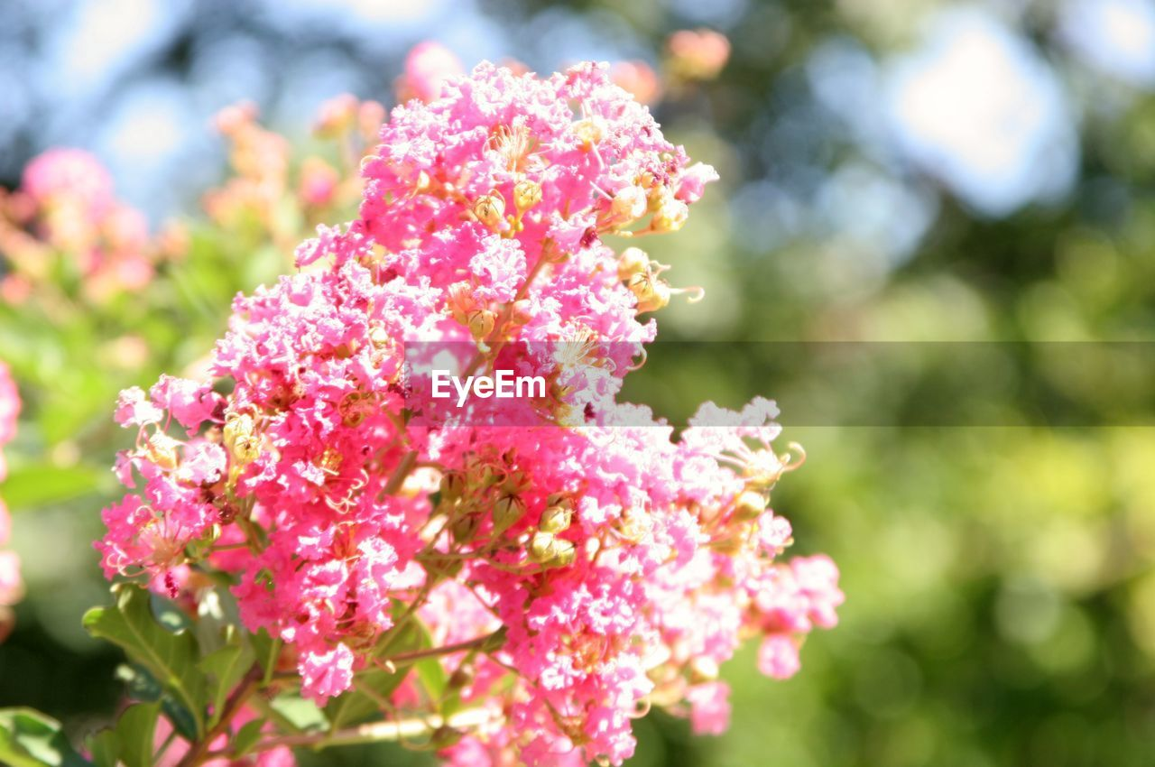 flower, nature, growth, beauty in nature, fragility, day, focus on foreground, pink color, freshness, outdoors, petal, no people, plant, blooming, close-up, flower head