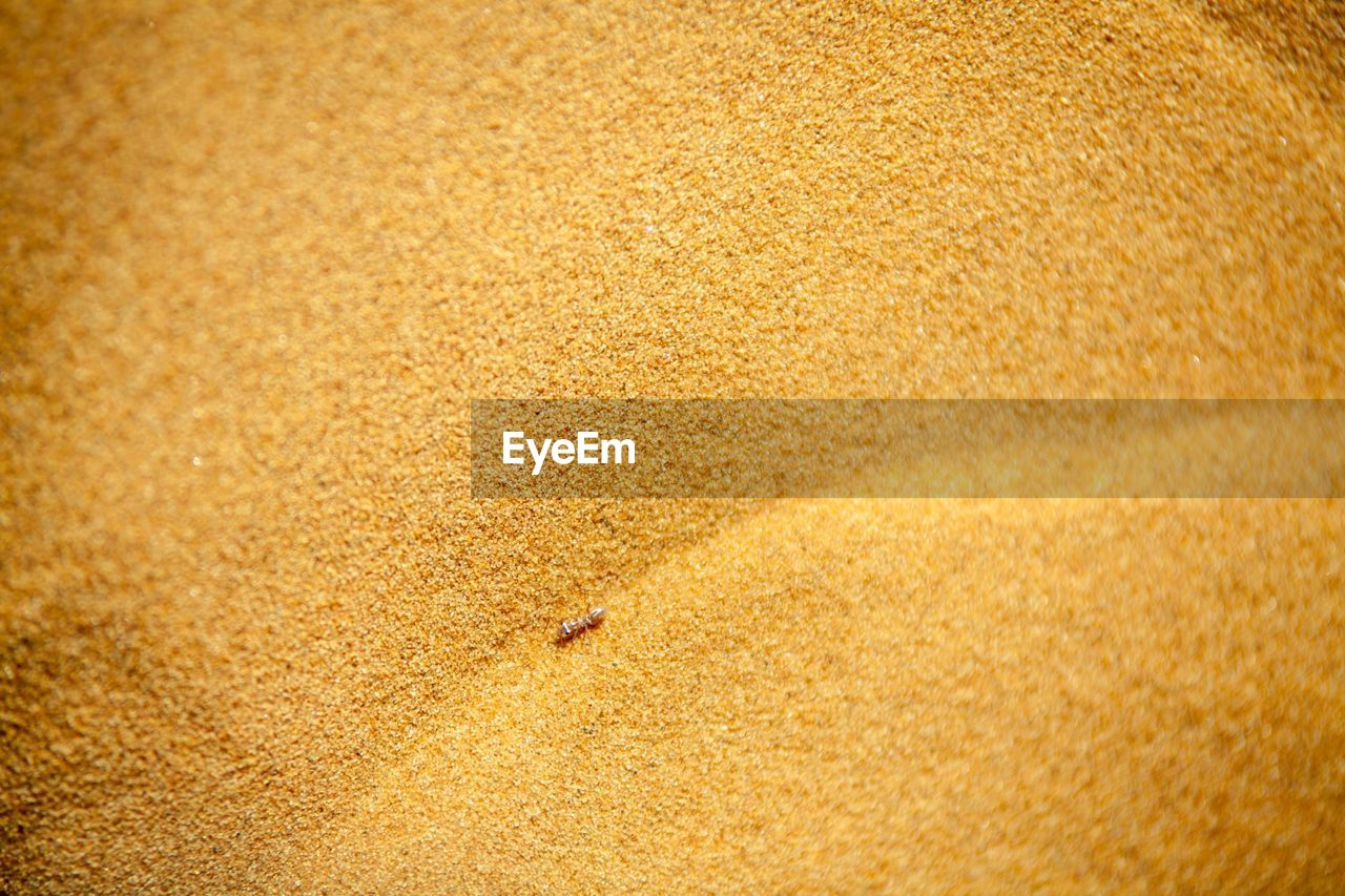 sand, backgrounds, animal themes, one animal, textured, full frame, beach, brown, animals in the wild, no people, close-up, nature, gold colored, day, animal wildlife, outdoors