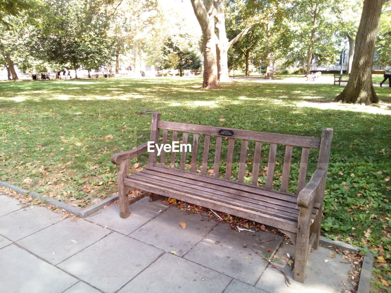 tree, park, plant, seat, bench, park - man made space, nature, day, grass, relaxation, park bench, outdoors, tree trunk, wood - material, trunk, footpath, lawn, empty, absence, front or back yard, no people
