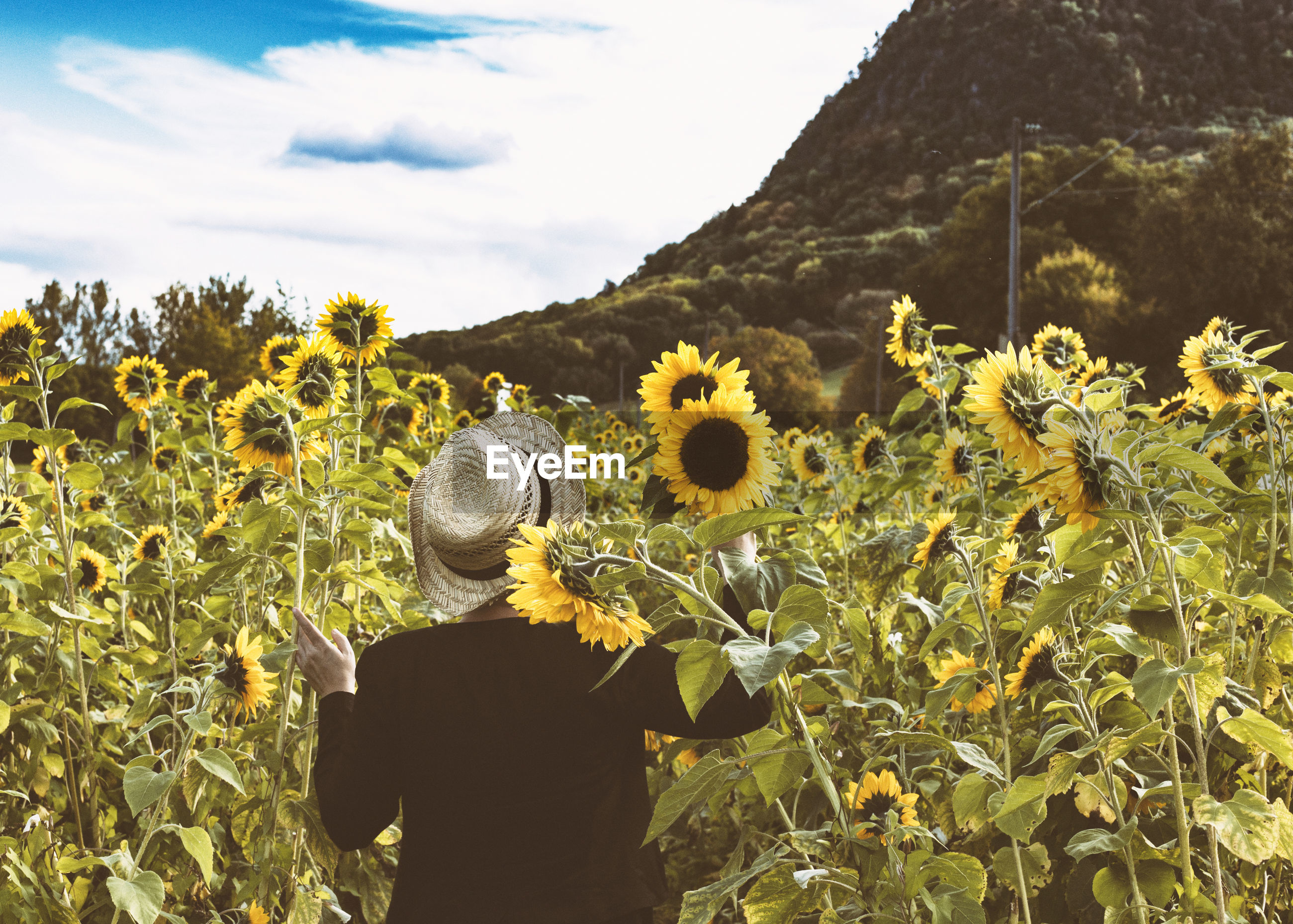 REAR VIEW OF WOMAN STANDING BY SUNFLOWER FIELD