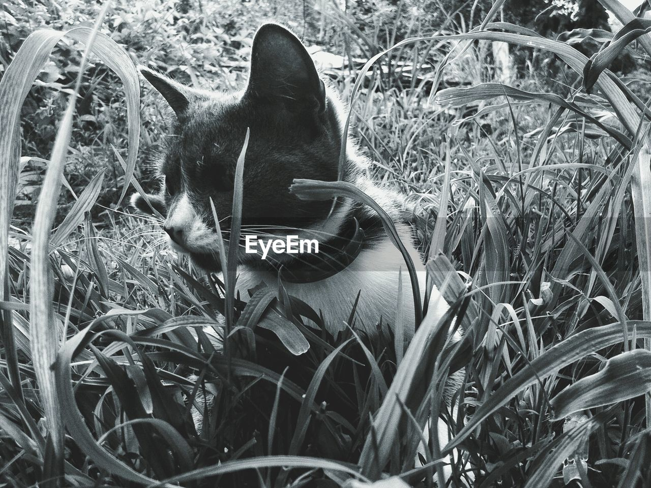 Close-Up Of Cat Amidst Grass On Field