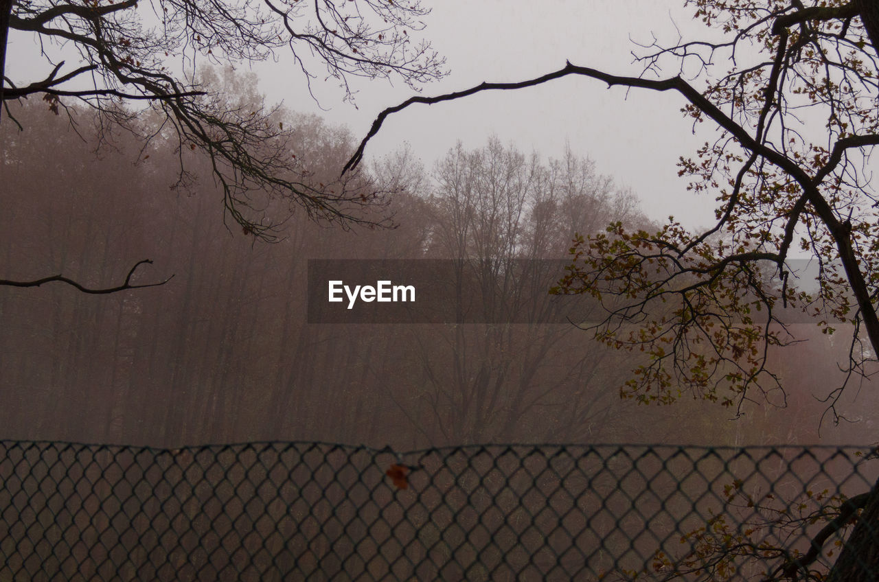 bare tree, tree, branch, chainlink fence, nature, outdoors, day, no people, sky, beauty in nature, fog, water