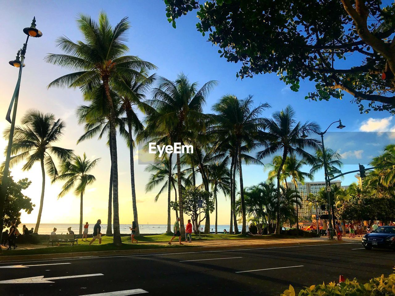 tree, palm tree, tropical climate, plant, sky, transportation, road, nature, mode of transportation, motor vehicle, land vehicle, car, city, growth, sunlight, day, street, incidental people, coconut palm tree, outdoors, tropical tree