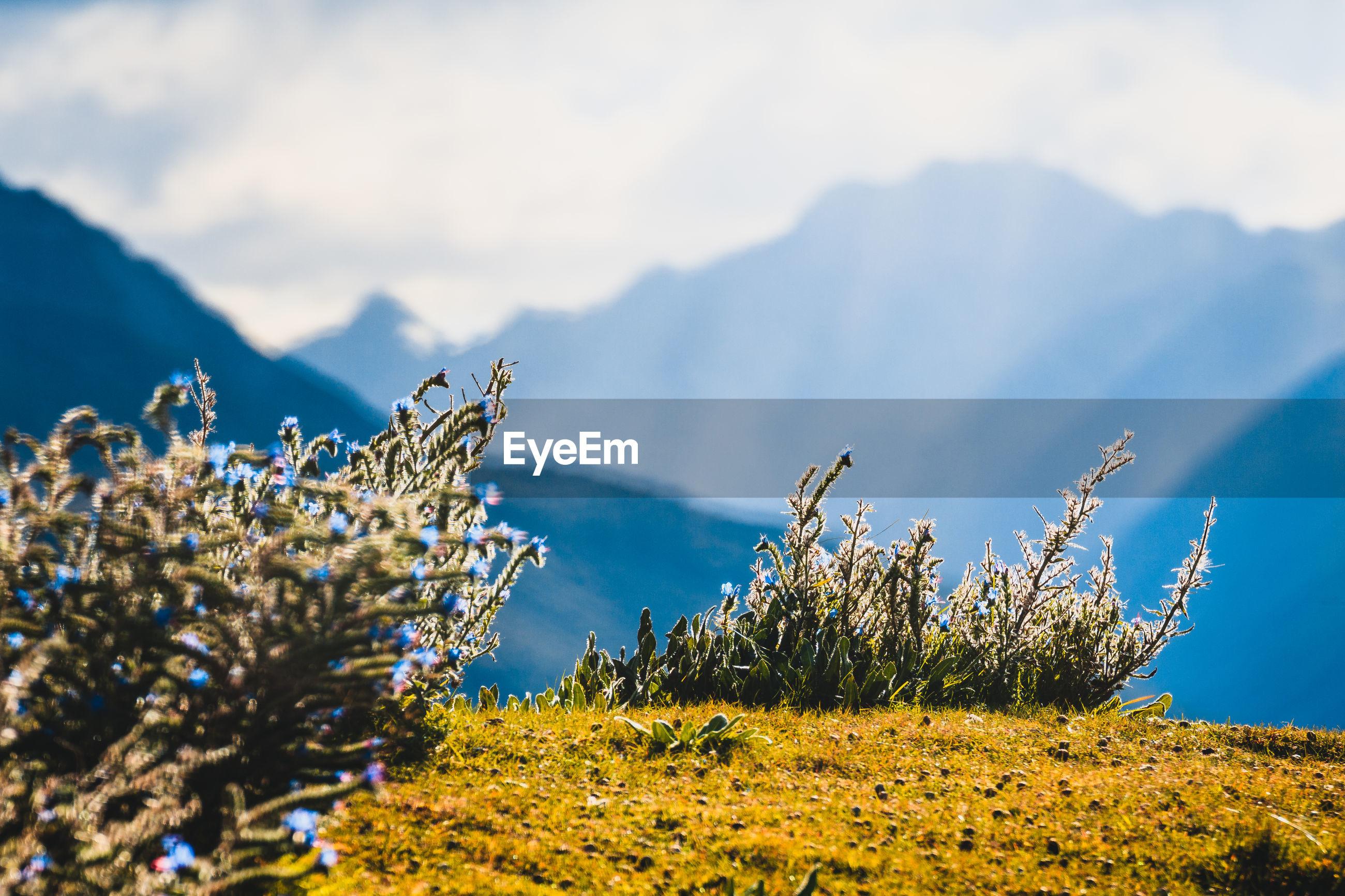 PLANTS ON LANDSCAPE AGAINST SKY