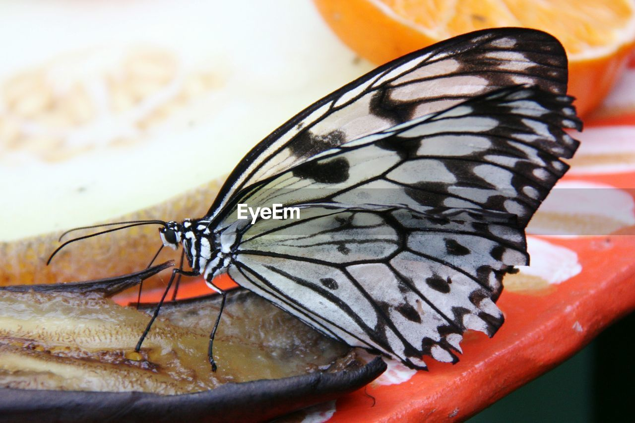 Macro shot of butterfly perching on food in plate