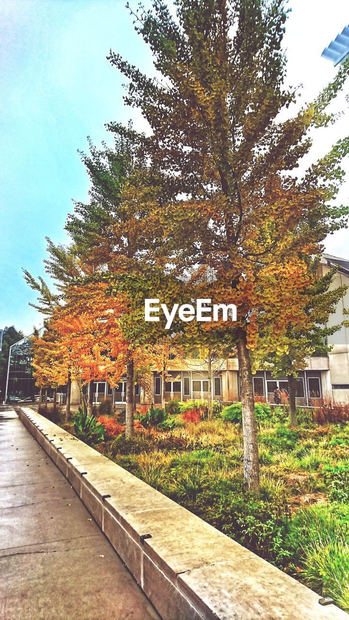 autumn, tree, change, architecture, building exterior, leaf, built structure, nature, outdoors, no people, day, beauty in nature, sky, city