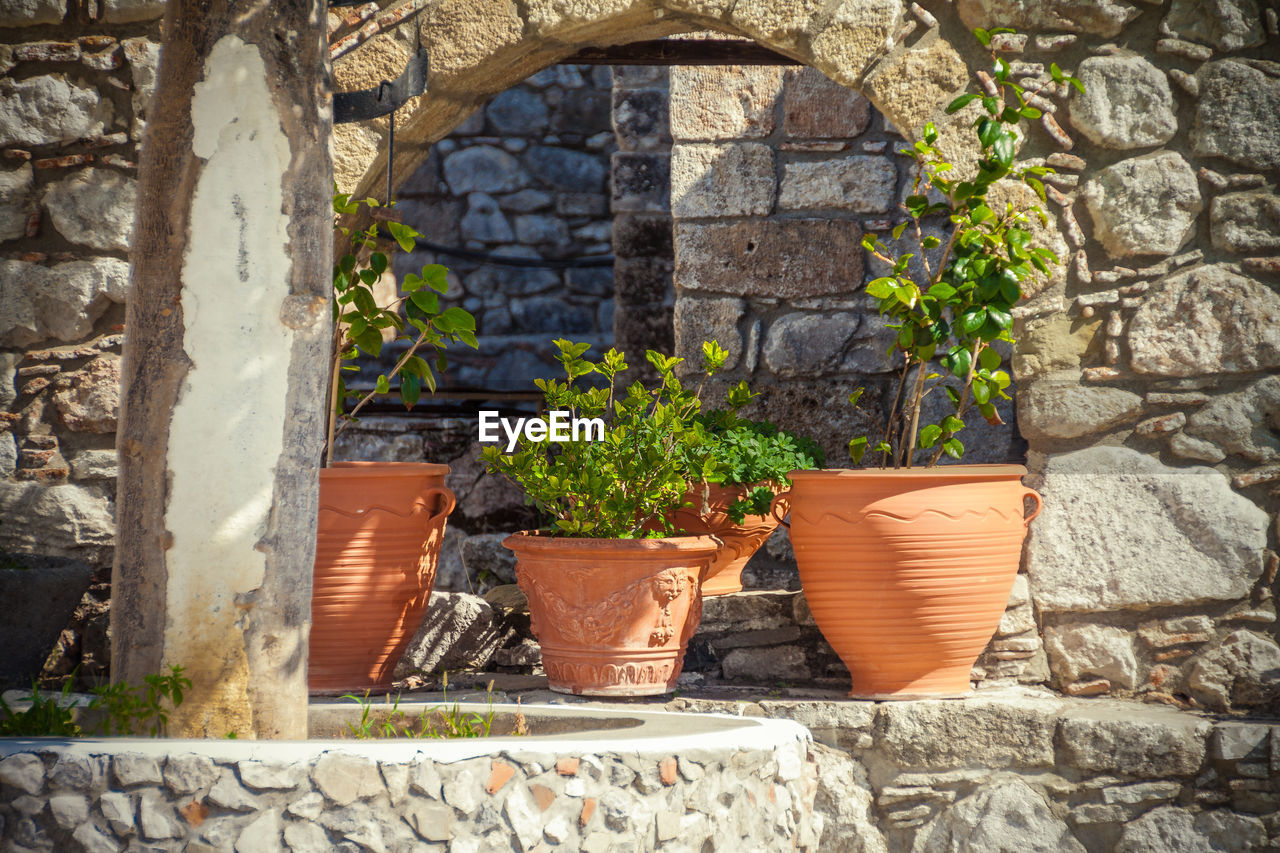 growth, plant, potted plant, architecture, built structure, no people, day, outdoors, building exterior, sunlight, nature, window box