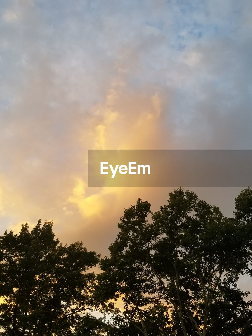 tree, sky, plant, beauty in nature, tranquility, cloud - sky, low angle view, sunset, tranquil scene, scenics - nature, growth, no people, nature, silhouette, outdoors, idyllic, sunlight, orange color, non-urban scene, treetop