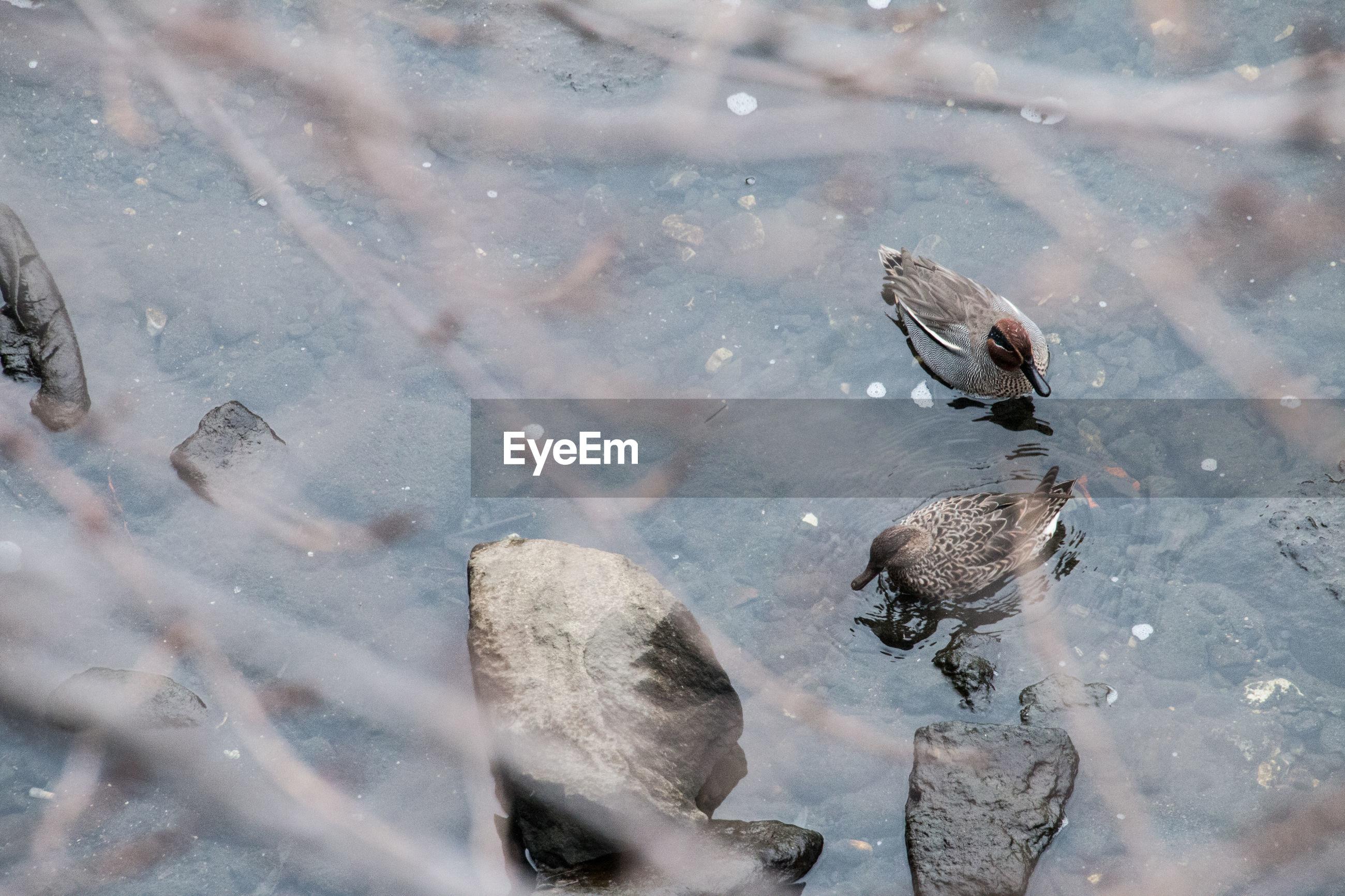 High angle view of ducks on lake