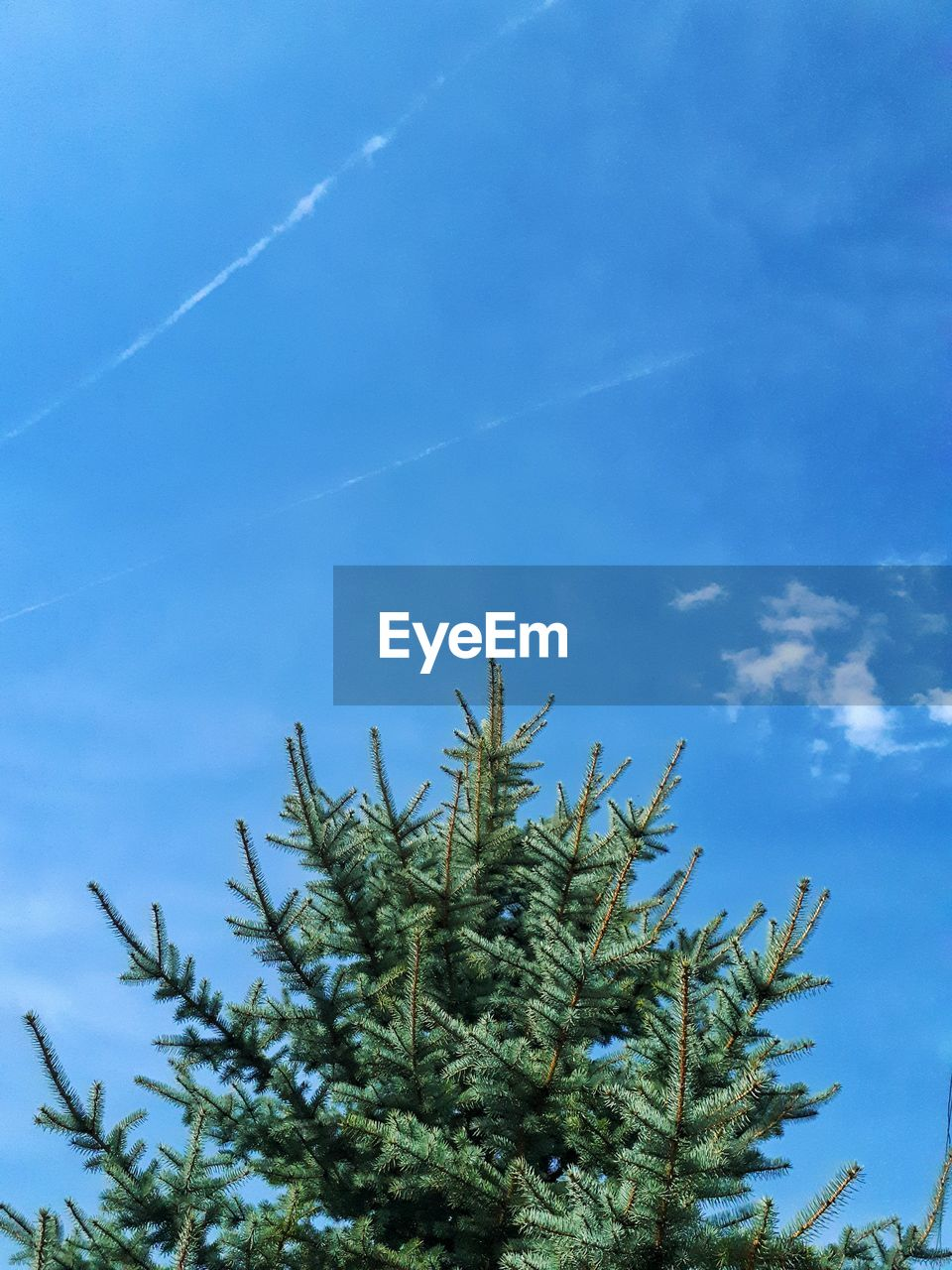LOW ANGLE VIEW OF TREE BRANCH AGAINST BLUE SKY
