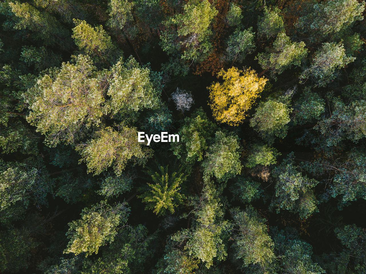 Full Frame Shot Of Trees At Forest