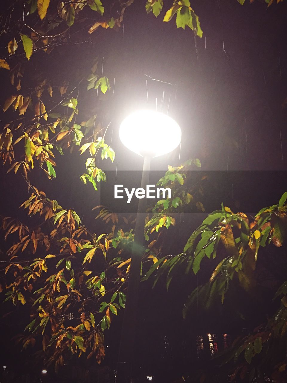 illuminated, lighting equipment, electricity, leaf, night, growth, light bulb, nature, plant, no people, tree, outdoors, close-up