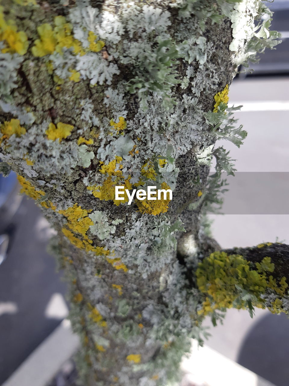 close-up, lichen, no people, day, growth, nature, yellow, tree, outdoors, tree trunk, beauty in nature