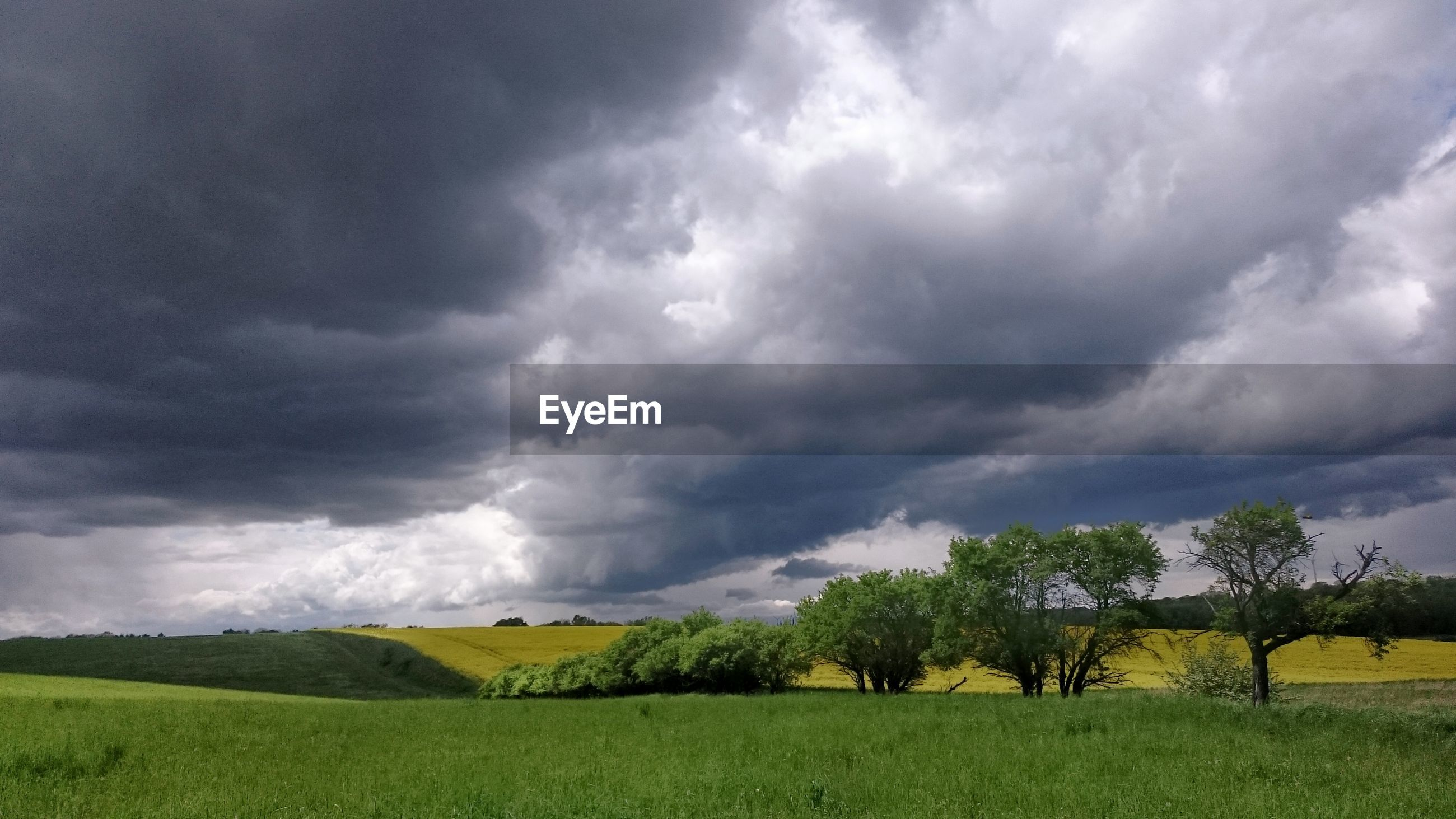 Trees on grassy field against cloudy sky