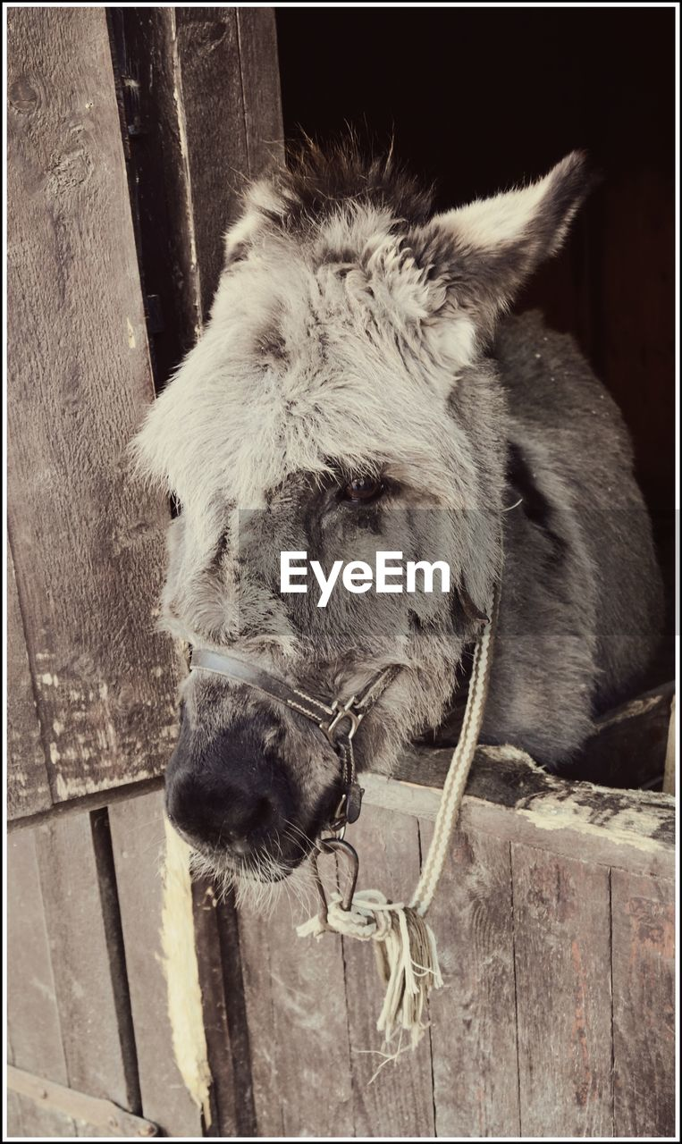 one animal, animal themes, horse, domestic animals, mammal, animal head, no people, close-up, day, outdoors