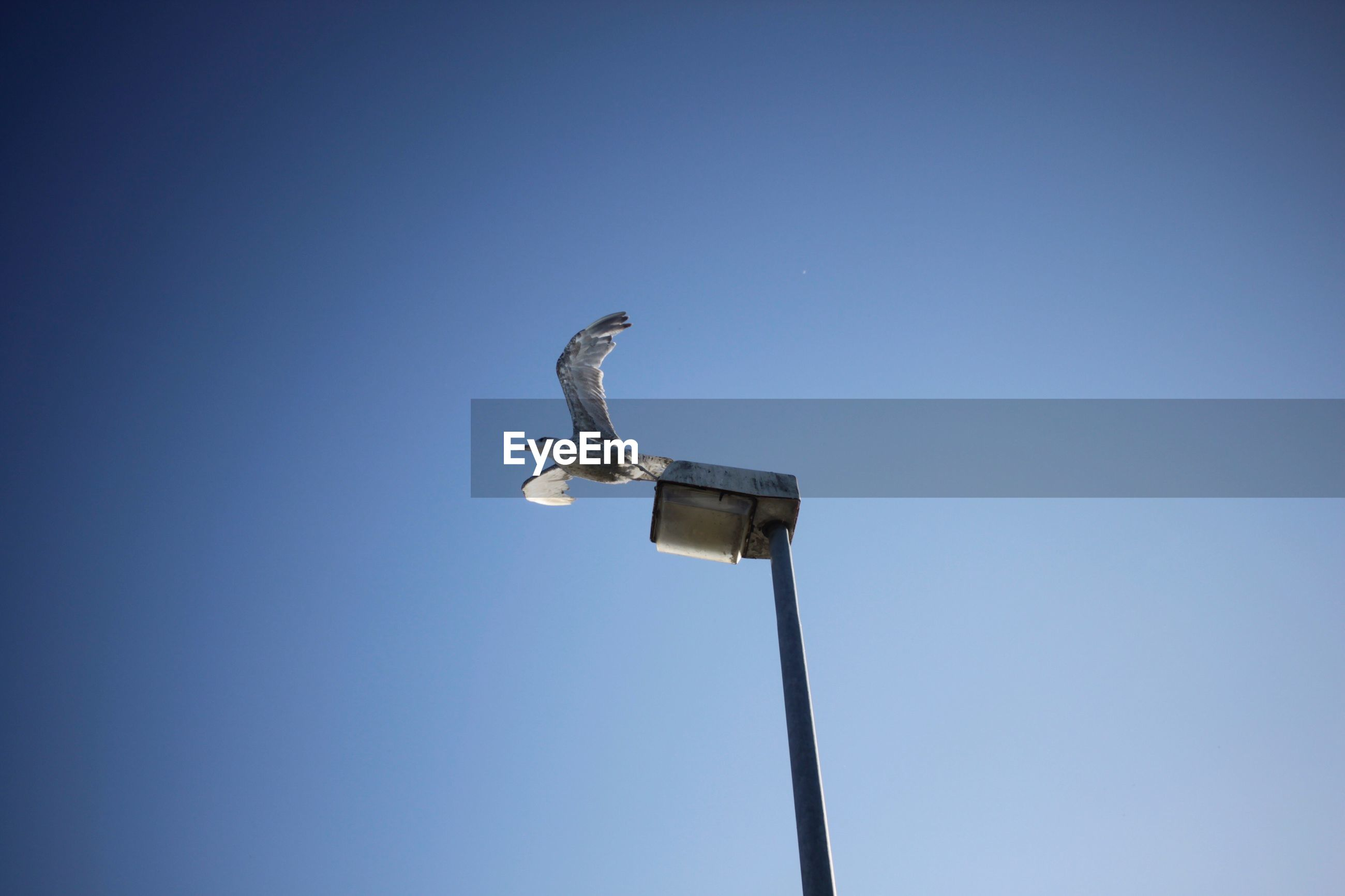LOW ANGLE VIEW OF BIRD ON BLUE AGAINST CLEAR SKY