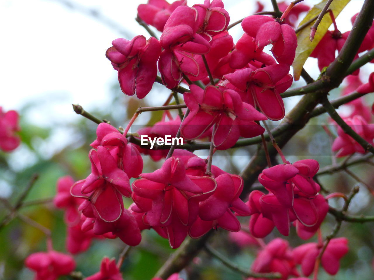 flower, growth, beauty in nature, fragility, nature, petal, tree, branch, freshness, outdoors, close-up, no people, twig, day, springtime, focus on foreground, pink color, flower head, plant, blooming