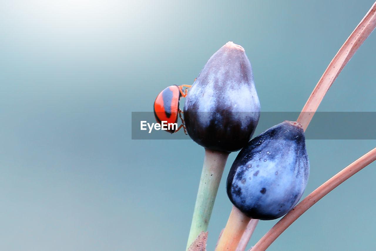 Close-Up Of Ladybug Perching On Plant