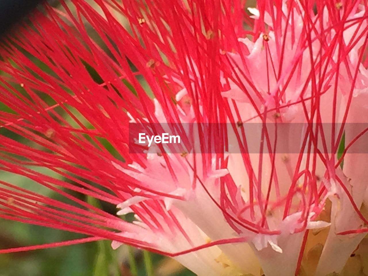 flower, growth, nature, beauty in nature, fragility, petal, pink color, freshness, plant, flower head, no people, close-up, day, outdoors
