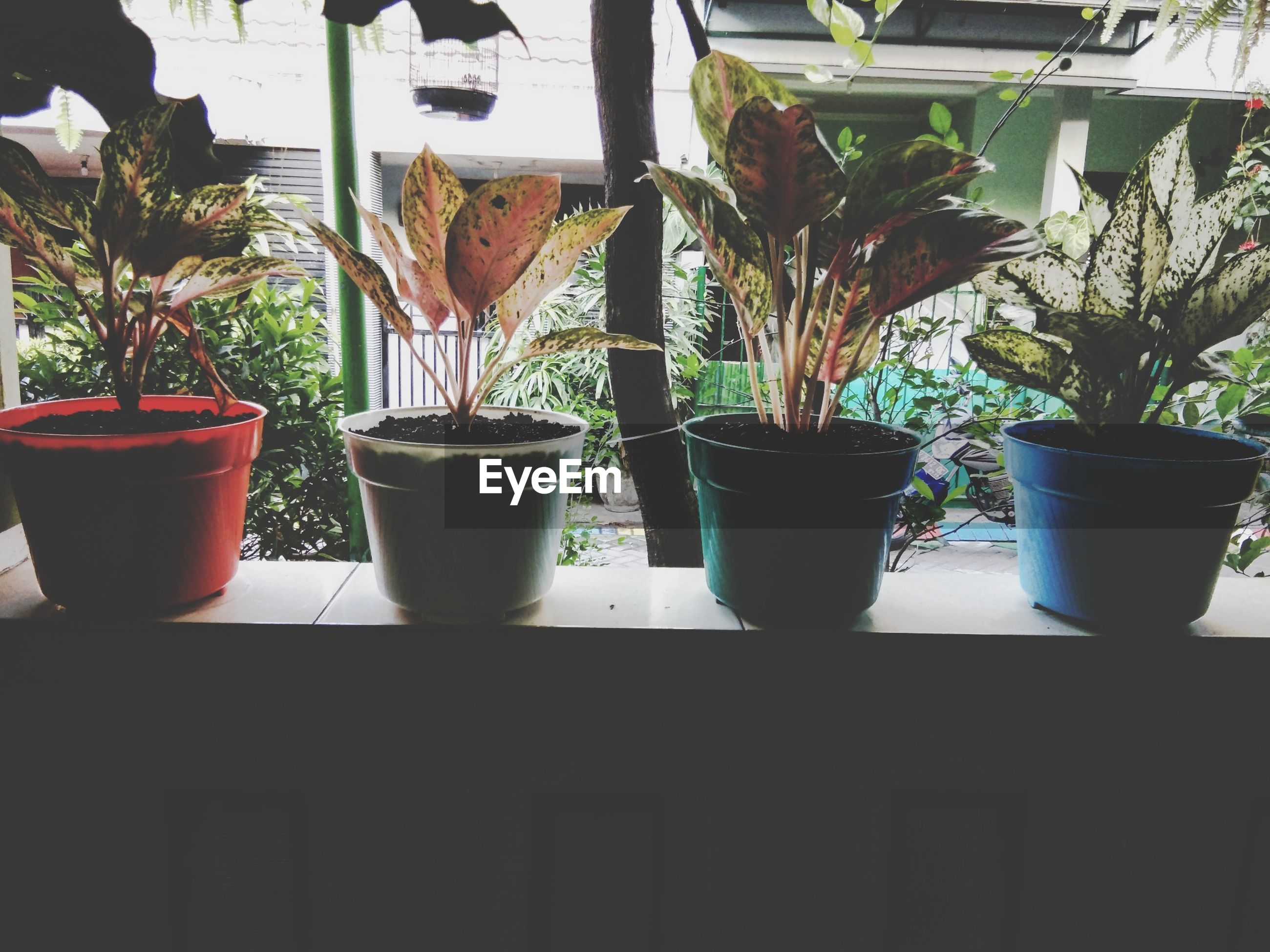 Potted plants arranged on window sill