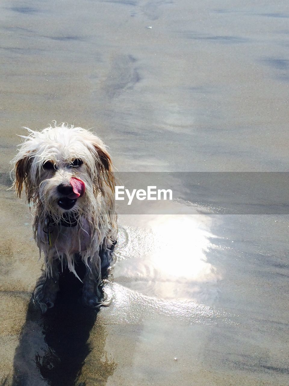 canine, dog, one animal, pets, domestic, domestic animals, mammal, animal, animal themes, water, vertebrate, wet, portrait, motion, nature, day, looking at camera, no people, beach, outdoors