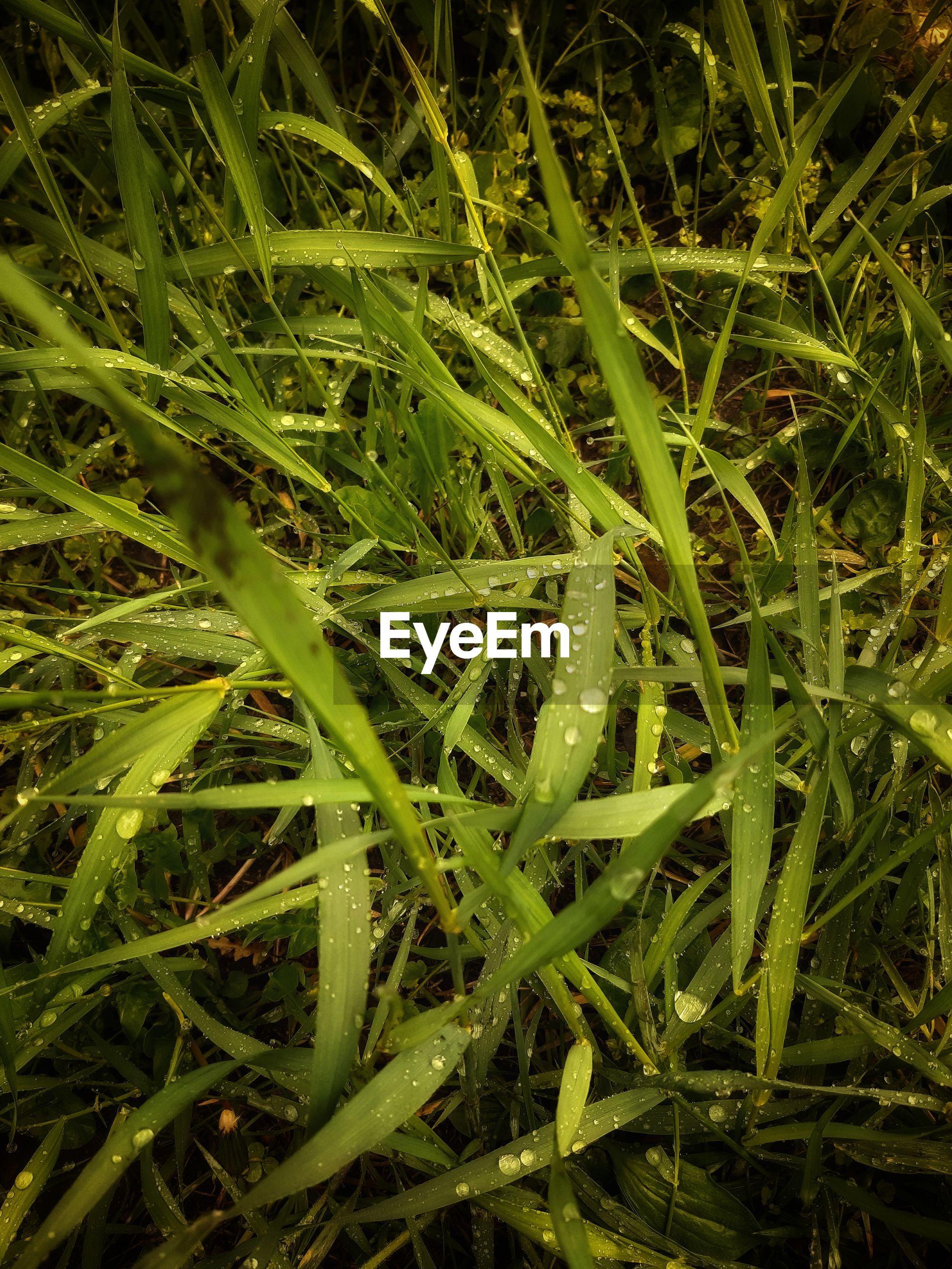 Full frame shot of wet grass