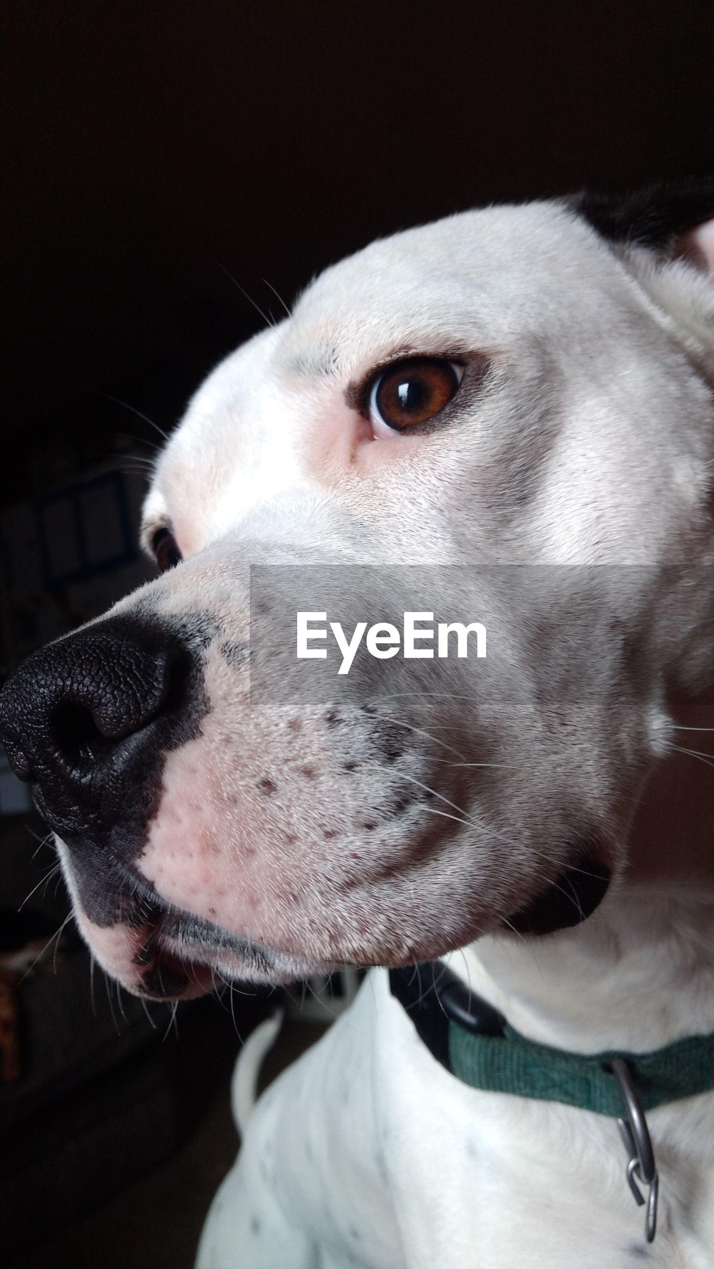 CLOSE-UP PORTRAIT OF DOG AGAINST WHITE