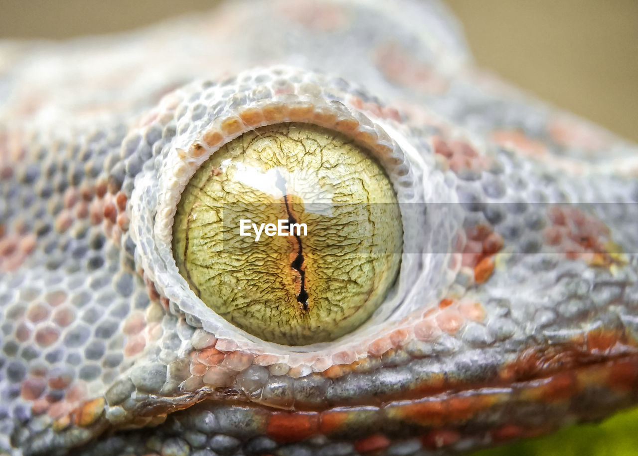 one animal, animal themes, animal, close-up, vertebrate, animal body part, animal wildlife, eye, animals in the wild, animal eye, reptile, no people, animal head, focus on foreground, body part, domestic, pets, selective focus, day, pattern, animal scale, animal mouth