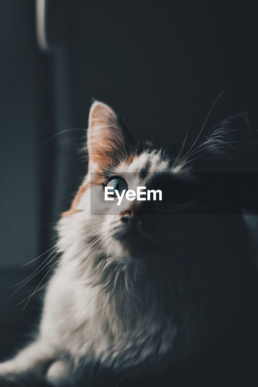 Close-up of portrait of cat