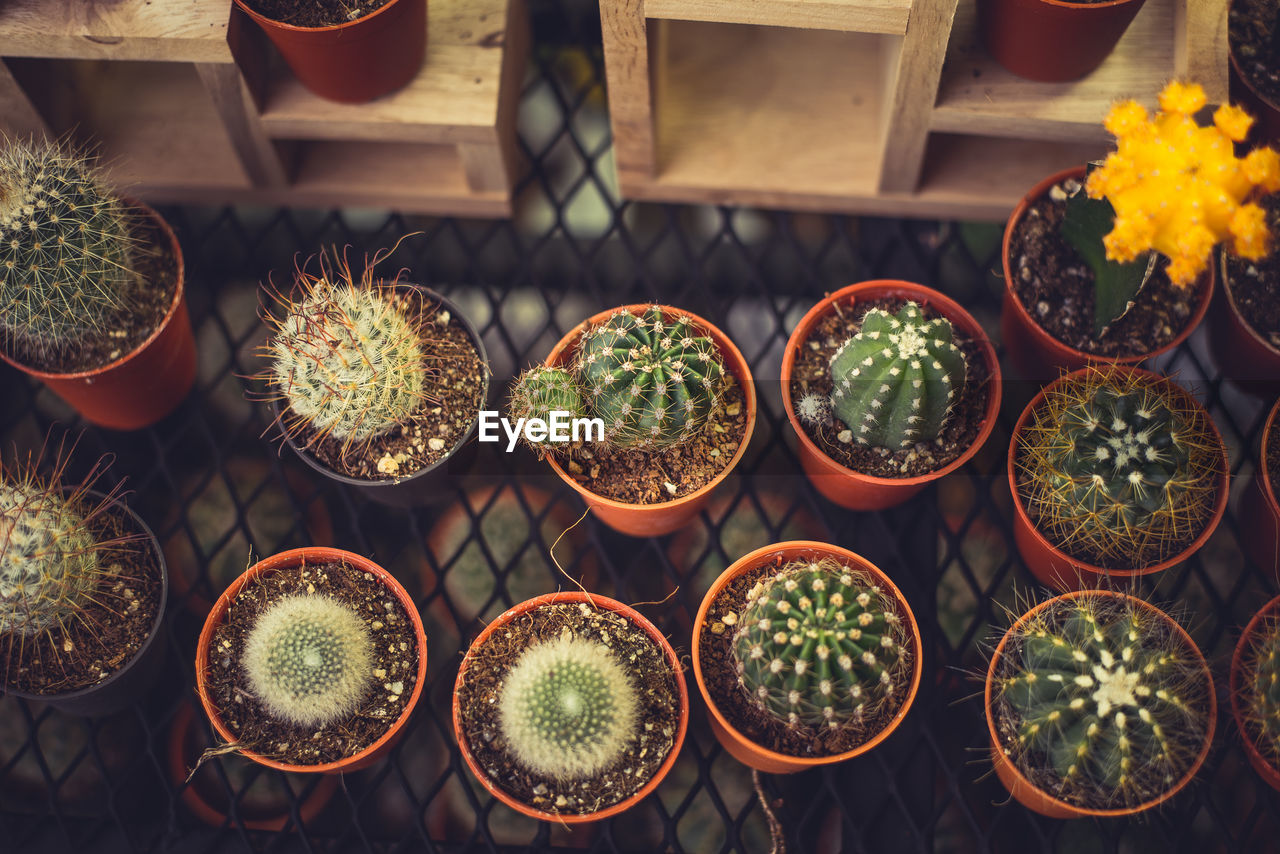High Angle View Of Potted Cactus Plants On Metal Grate