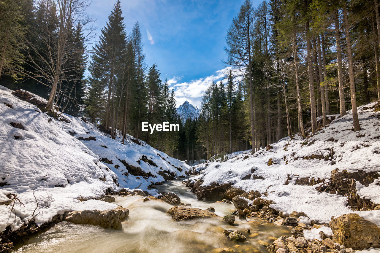 snow, tree, winter, beauty in nature, plant, cold temperature, tranquility, tranquil scene, nature, scenics - nature, non-urban scene, mountain, day, land, sky, no people, forest, environment, growth, snowcapped mountain