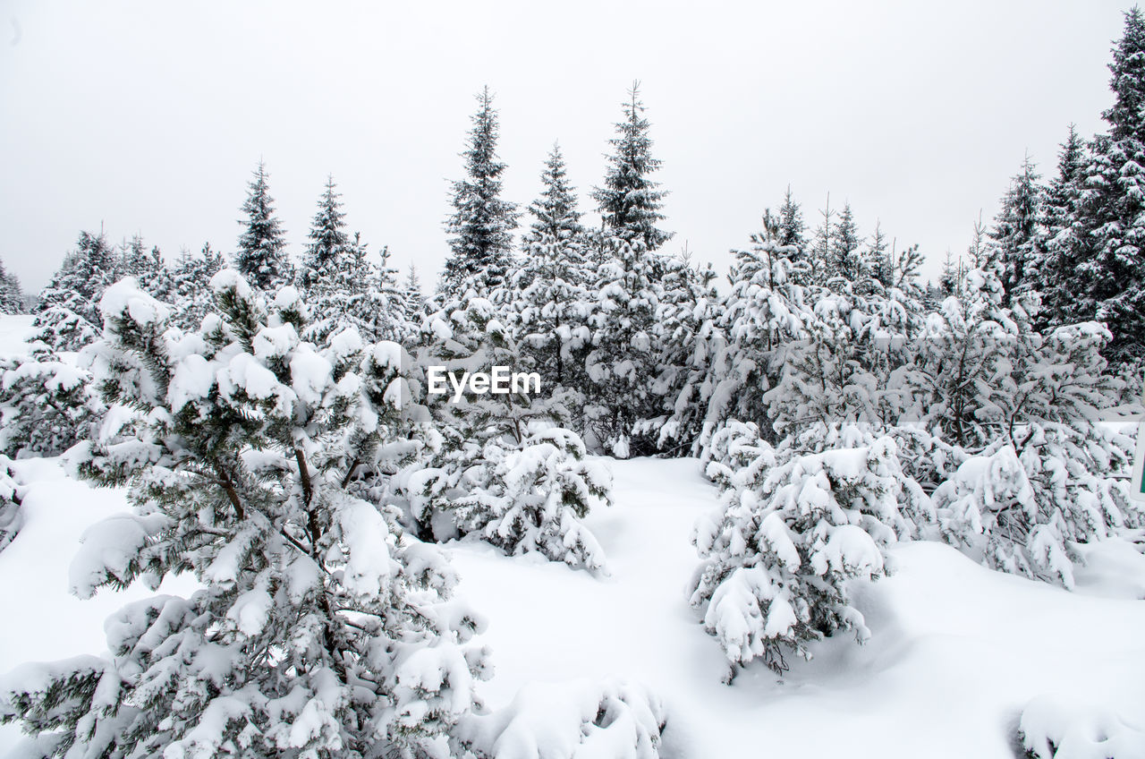snow, winter, cold temperature, tree, white color, nature, tranquility, beauty in nature, no people, weather, tranquil scene, scenics, outdoors, day, sky